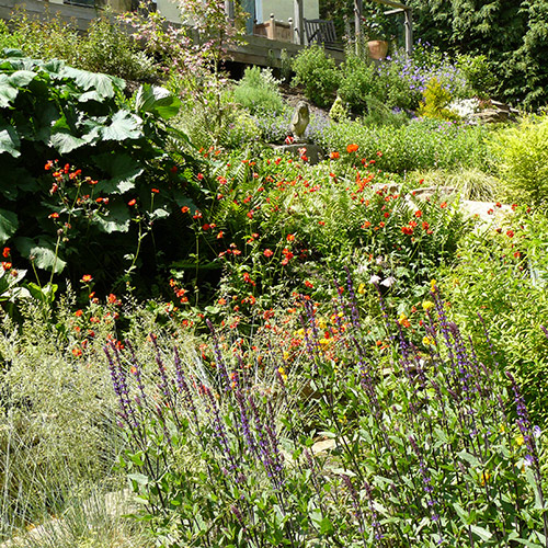 Scented and colourful planting for wildlife
