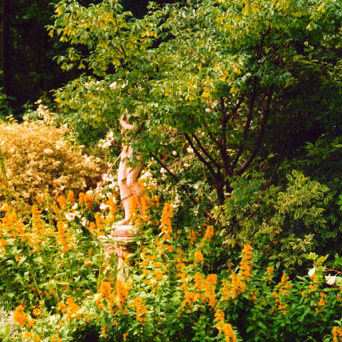 Woodland shrubs and herbaceous perennial
